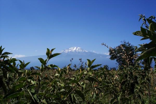 majestic mount kilimanjaro tansania