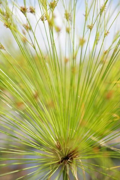 senkrecht wasserpflanze vertikal gewaechse bepflanzt vertikale