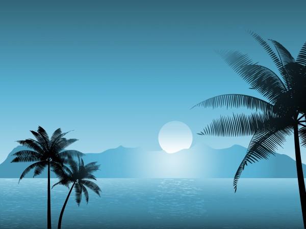 blatt baumblatt baum nacht nachtzeit sonnenuntergang