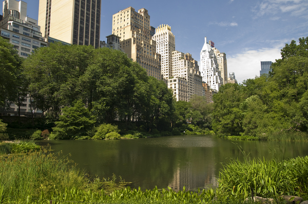 new yorker central park