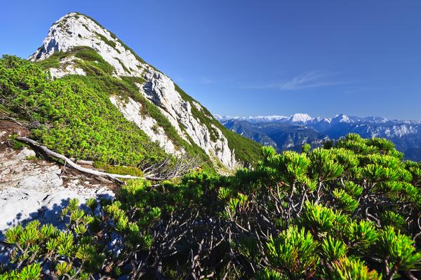 chiemgauer alpen ii