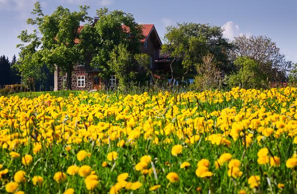 small house inside dandelion