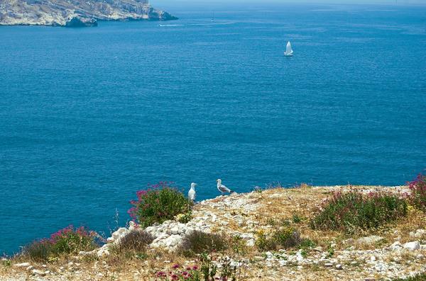 zwei mediterrane moewen