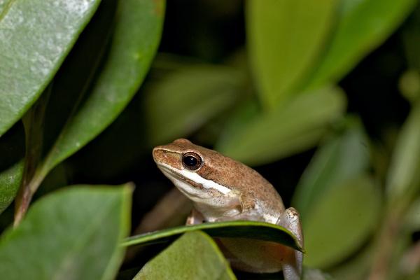 baum tier amphibie gruen gruenes gruener