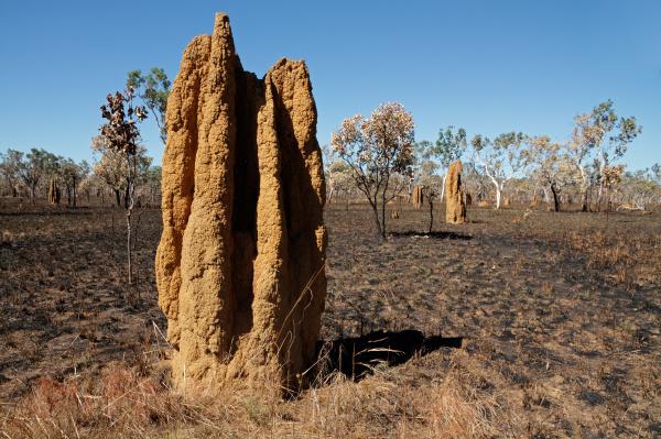 kathedrale termitenhuegel australien