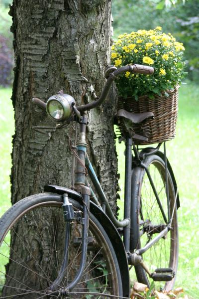 altes fahrrad als gartendekoration mit blumenkorb