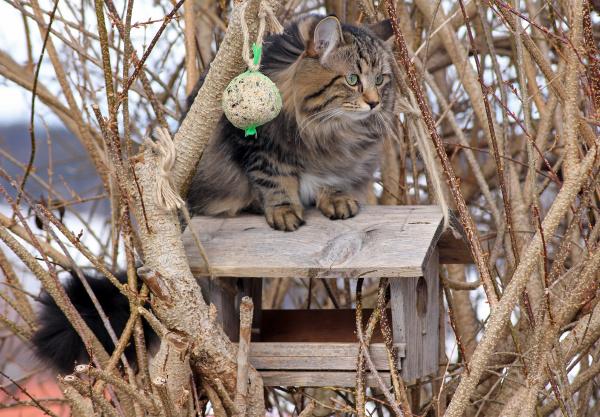 katzen sind fuer voegel gefaehrlich