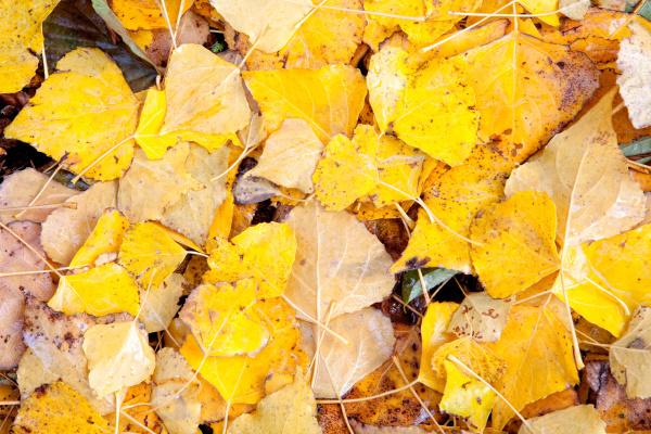 blatt baumblatt winter abfliegen saison jahreszeit