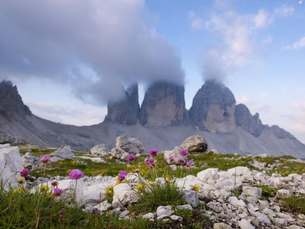 berge blume pflanze gewaechs nationalpark dolomiten