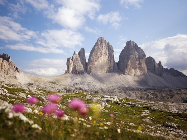 fahrt reisen berge blume pflanze gewaechs
