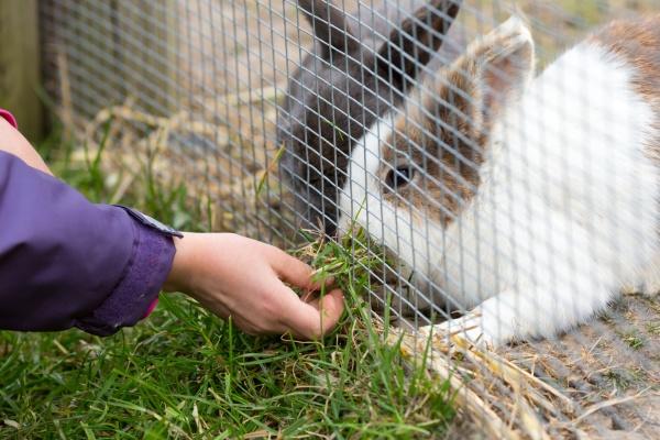 kind fuetterung kaninchen