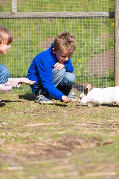 kinder die kaninchen fuettern