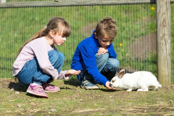 kinder fuettern kaninchen