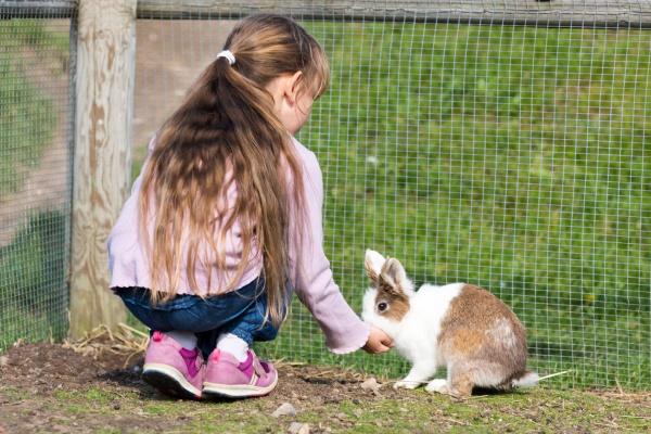 maedchen fuetterung kaninchen