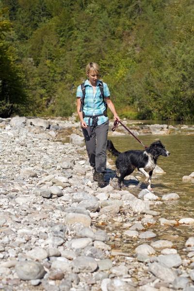 sport hund bergwandern fluss wasser h2o