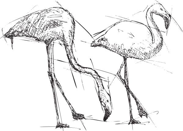 skizzieren sie illustration von flamingos
