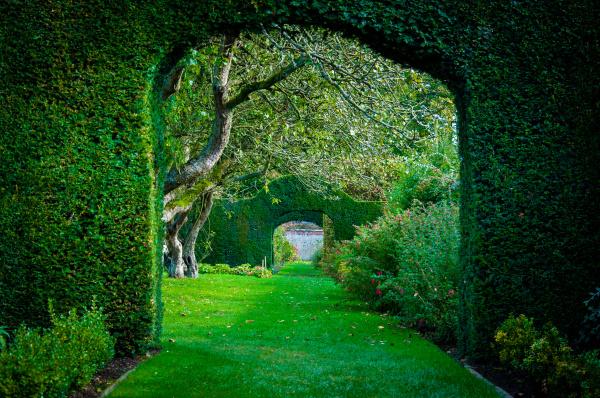 gruene pflanzen boegen in englisch landschaft