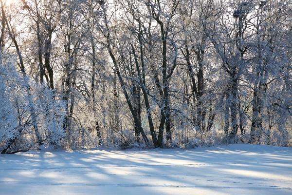 baum park winter ast zweig waelder