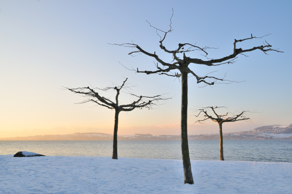 malerische winterlandschaft 3 baeume im schnee