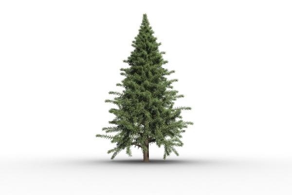 baum tannenbaum illustration digital weihnachtsbaum weihnachtszeit