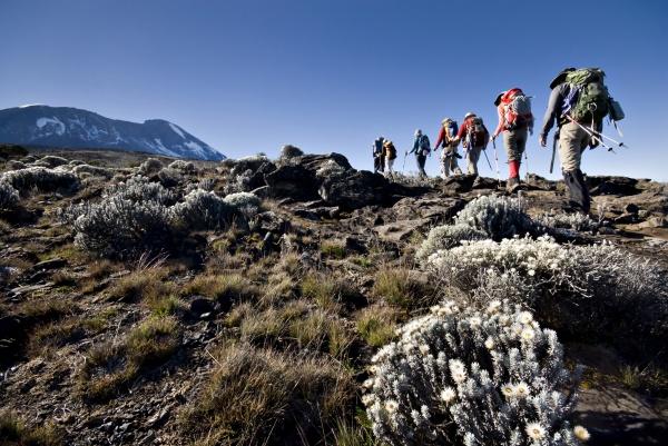 wanderer wanderung in richtung mt kilimanjaro