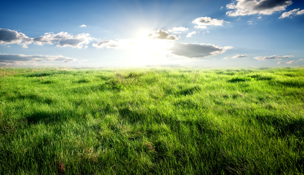 gras und sonnenlicht