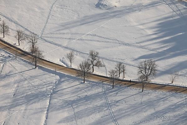 winterstrasse mit baeumen