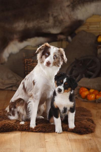 tier haustiere decke ueberzug hund indoor