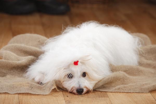 tier haustiere hund fotografie photo foto
