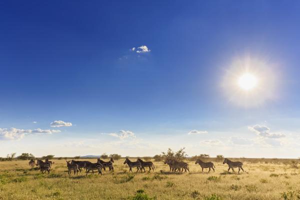 namibia etosha nationalpark herde von steppenzebras