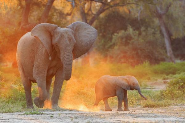 afrika simbabwe mana pools nationalpark kuh