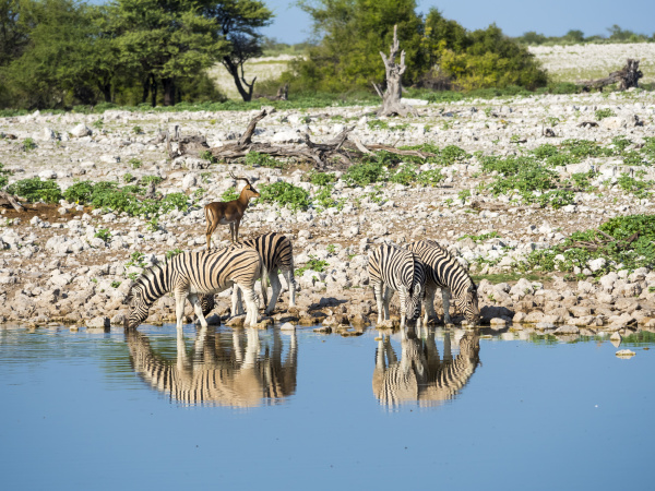 trinken trinkend trinkt tier saeugetier nationalpark