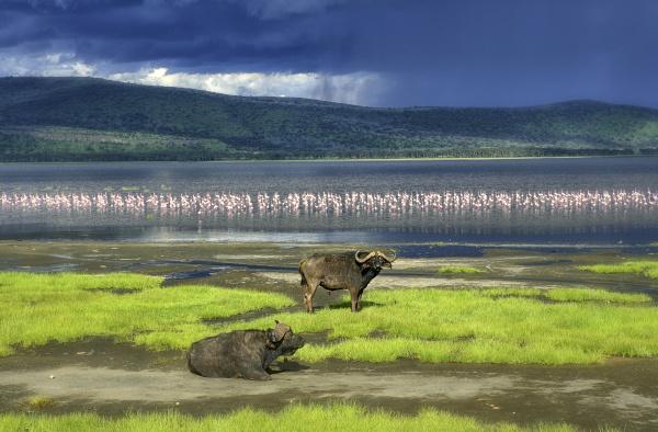 kenia lake nakuru national park zwei