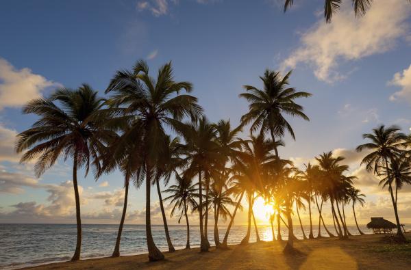 dominikanische rebublik tropischer strand mit palmen