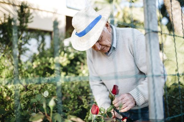 freizeit garten blume rose pflanze hobby