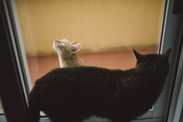 zwei katzen die durch ein fenster