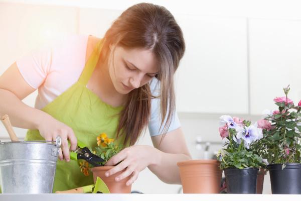 frau beschnitt topfpflanzen drinnen