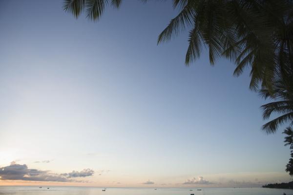 palmen westkueste barbados westindische inseln karibik