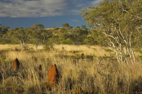 baum sonnenlicht australien fuenfter kontinent down