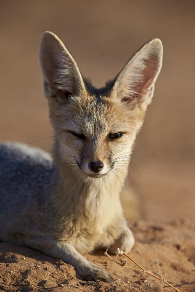 fahrt reisen tier saeugetier fauna wild