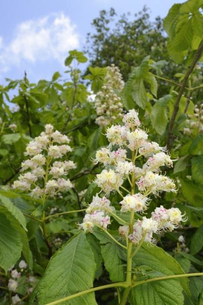 blatt baumblatt blume pflanze gewaechs gruen