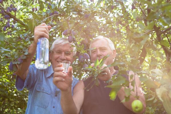 glueckliche senioren mit alkohol unter obstbaeumen