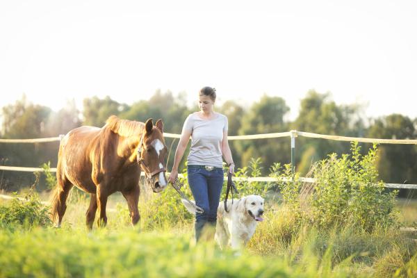 junge frau die mit pferd und