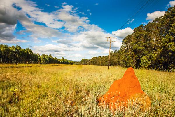 termitenhuegel in suedafrika