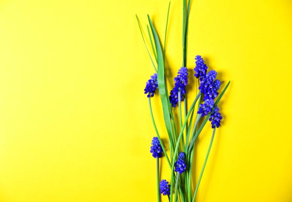 gelber hintergrund mit blauen blueten