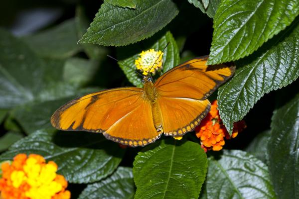 germany 2c mainau 2c julia butterfly