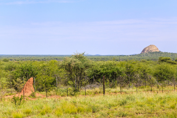 termitenhuegel mit landschaft in namibia