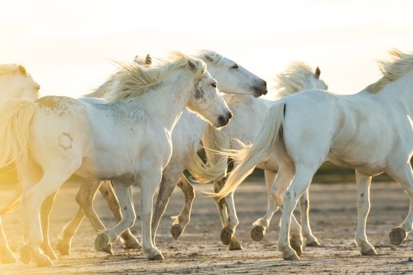 fahrt reisen pferd ross tier horizontal