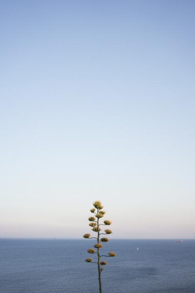 blau blume pflanze gewaechs outdoor freiluft