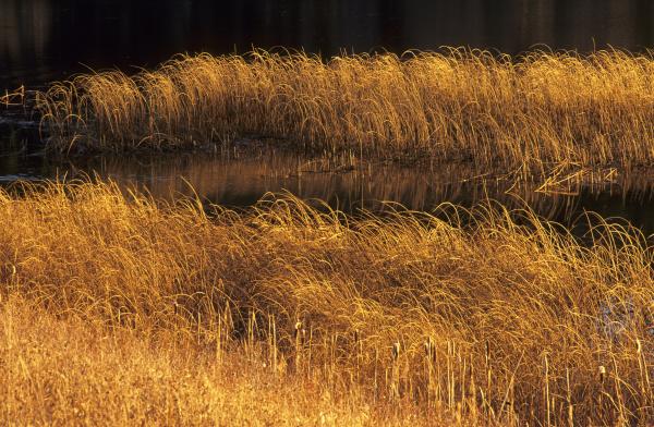 herbstlich gefarbtes gras an einem teich